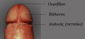 Χαλινός (πετσάκι) πέους